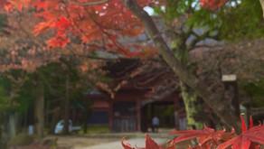 【秋企画参加者募集】パワースポットで紅葉狩り