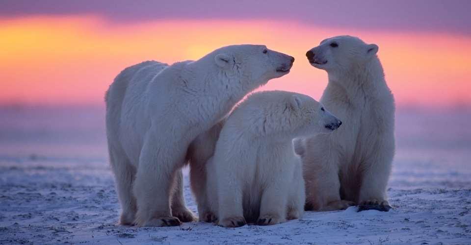 Polar Bear Viewing Adventure