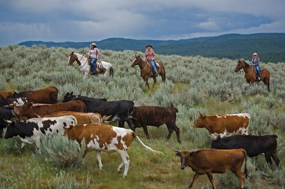 Ranches Around the U.S.