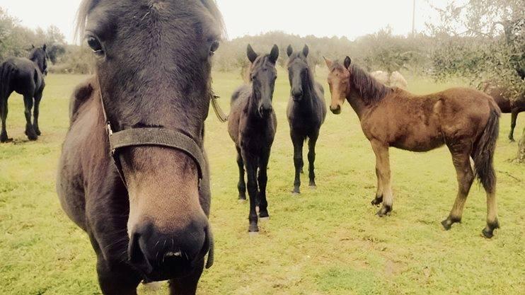 I cavalli della tenuta