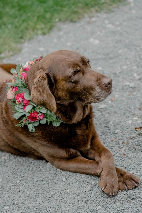 Blumenhalsband für den Hund