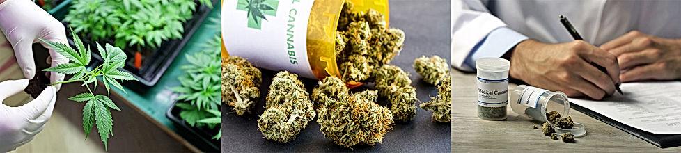 Medical Marijuana Business Loans
