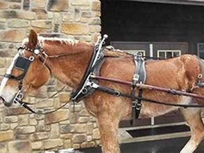 Horse-Drawn Carriage & Wagon