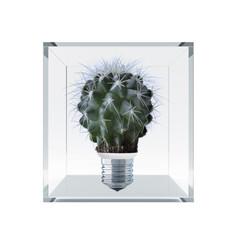 cactus box.jpg
