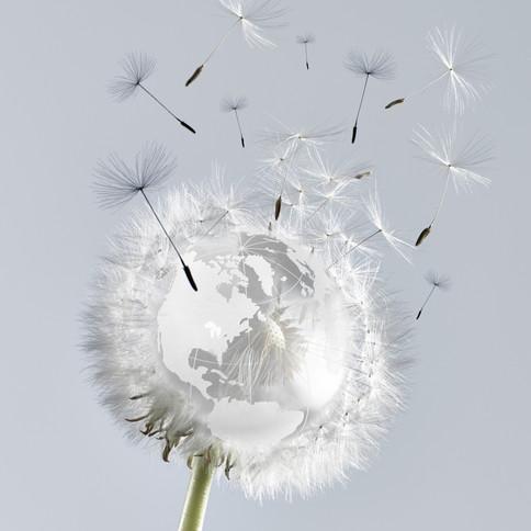 earth day dandelion.jpg