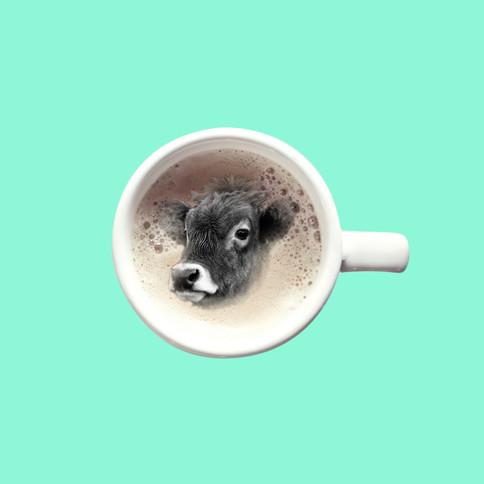 black cow drink.jpg