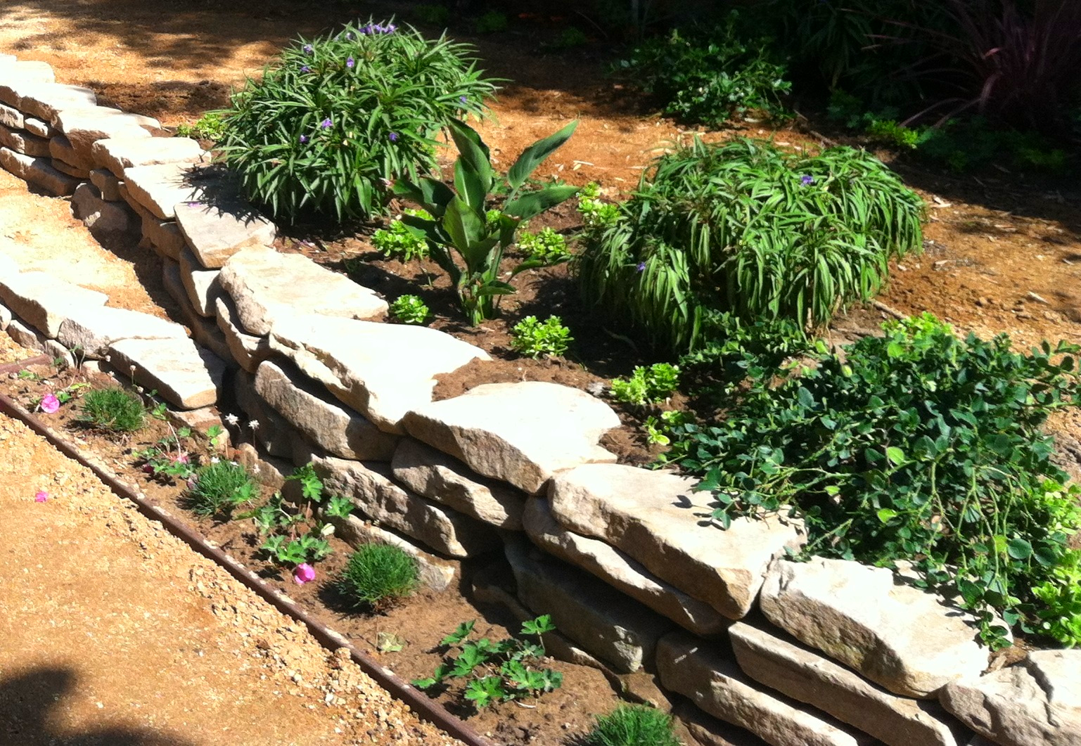 Close Up of Garden Bed