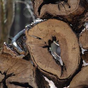 Une pile de troncs