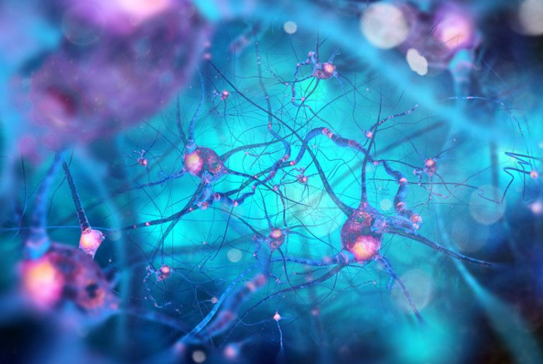 Accessing the Building Blocks for Positive Neural Plasticity