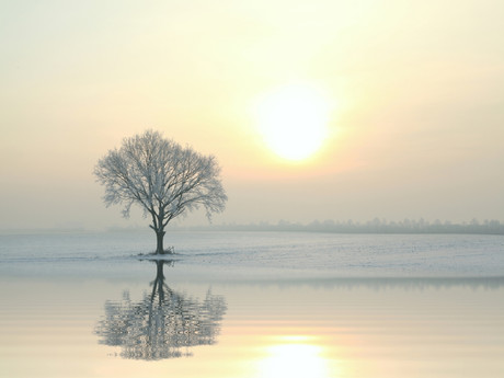 Cultivating Calm Amidst a Storm