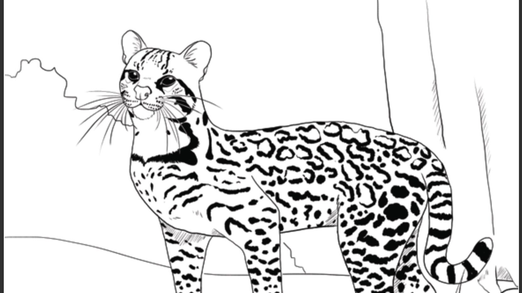 Ilustraciones para pintar