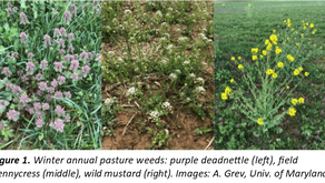 Spring Weed Control For Pasture & Hayfields