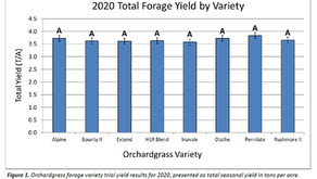 2020 Orchardgrass Variety Trial Update