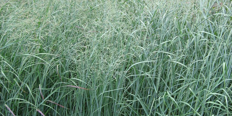 Native Grass Field Day