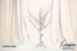 silver manzanilla tree stock 5203.jpg