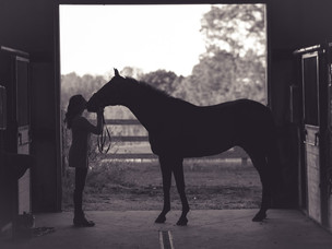 Information about horse aging