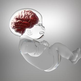 El cerebro de mi bebé, un órgano maravilloso