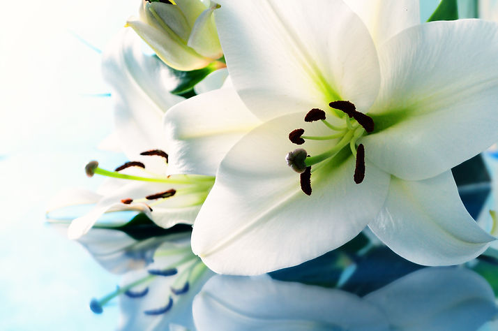 Lily_Flower_aqua.jpg