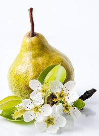 Pear-SundayMorning_MomentsCollection_edi