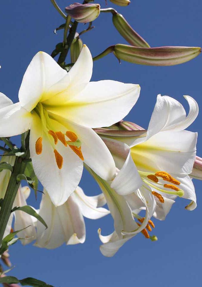 Flawless-Illuminating-Silk-Cream_ingredi