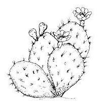 prickly-1.jpg