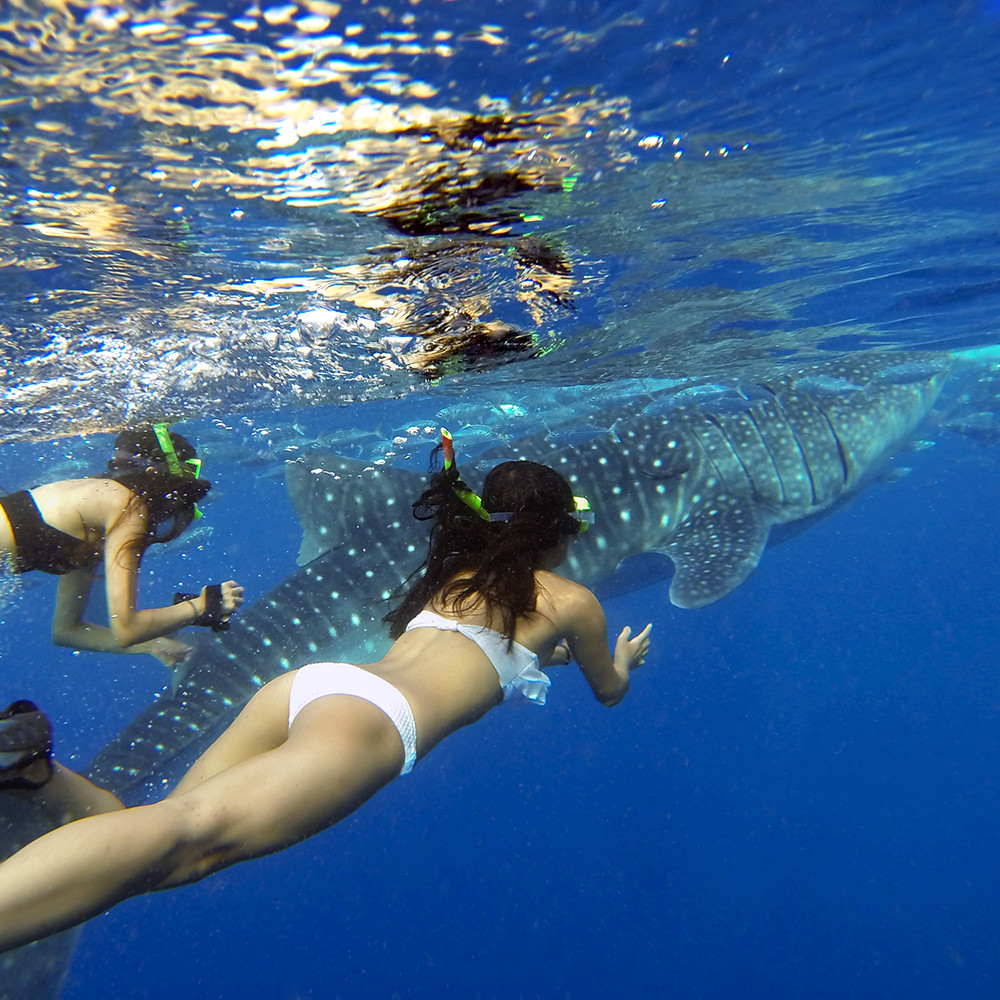 WHALE SHARK ENCOUNTER Package