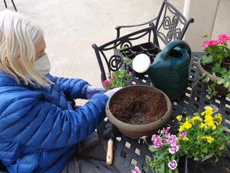 Bloom and Grow Garden Provides Engagement and Enjoyment