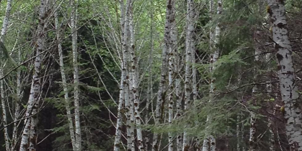 Tree Talk (1)