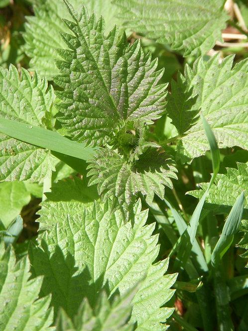 Good Green Earth Stinging Nettle