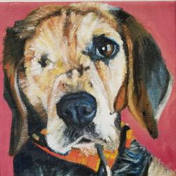 , the beagle