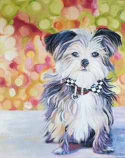 Toto - TOP DOG Mutt Strut