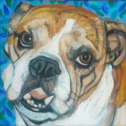 Toby, the Bulldog