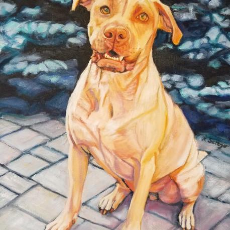 Reina - Indy Mutt Strut's TOP DOG 2018