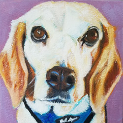 Portrait of Weezie, the Beagle