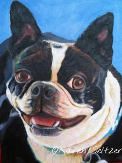 Spot, the Boston Terrier
