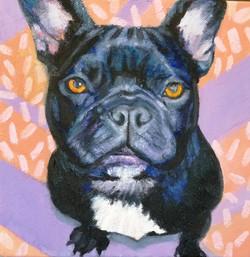Custom Pet Portrait in Oil