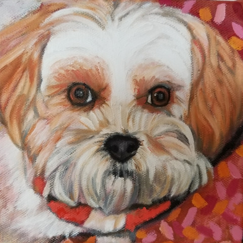 A custom pet portrait of Cassie the Shihtzu,  6 x 6 oil on canvas.