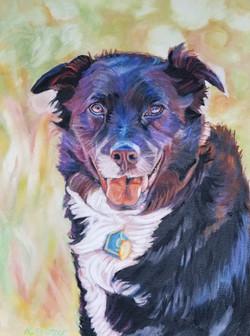Indy, Mutt Strut's Top Dog