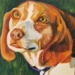 Pet Portrait of Ozzy the beagle's