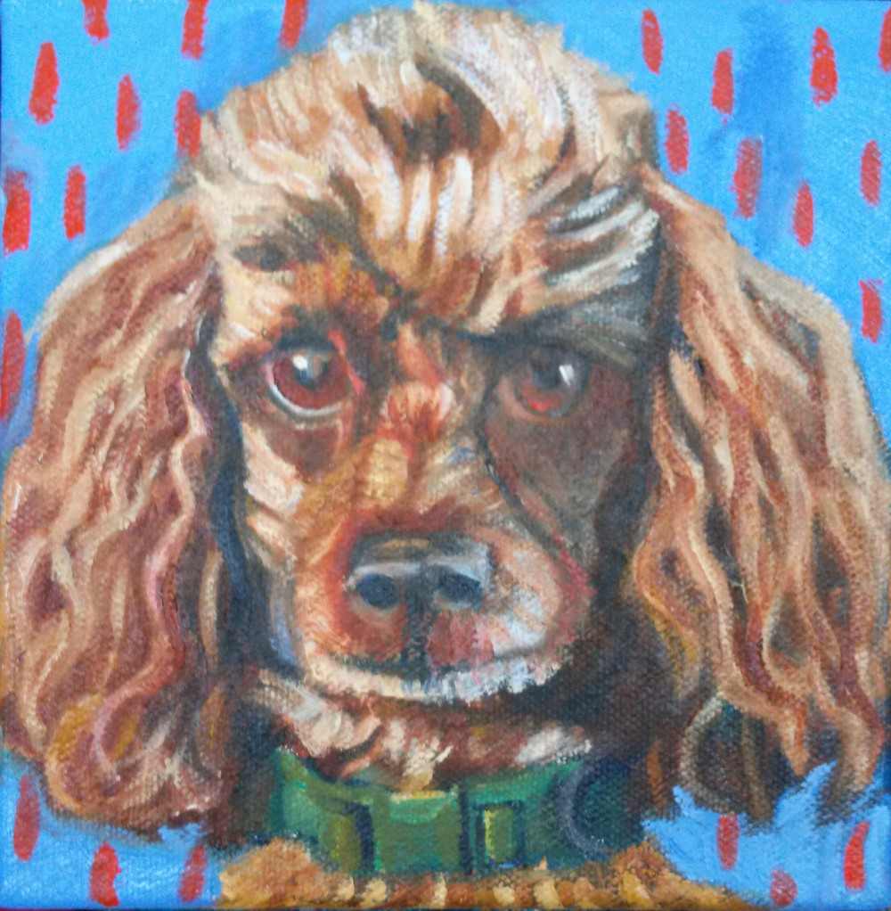 Custom pet portrait in oil from her photo. Cocoa the Poodle.