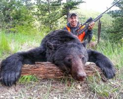 bear_wto4-495x400