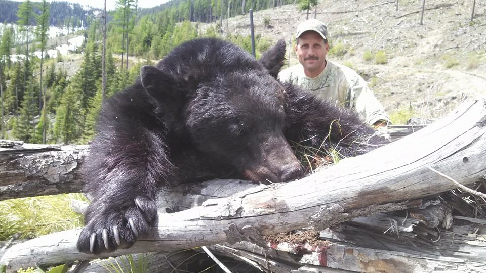 bear_wto_2015