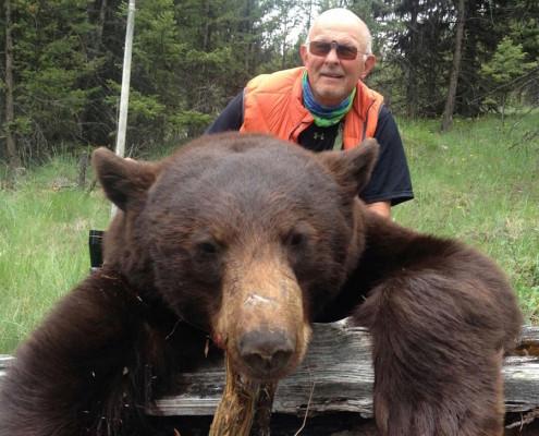 bear_wto-495x400