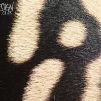 Sony A64 - Zebra