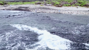 Plastic Oceans Fact Trailer
