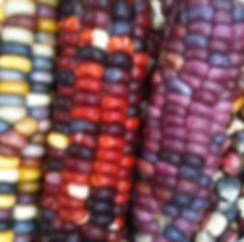 flour-corn-painted-mountain_LRG.jpg