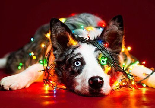 Τα Χριστούγεννα έρχονται! Σεβαστείτε και προστατέψτε τον σκύλο σας.