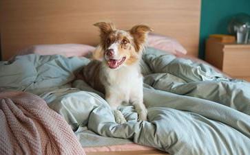 Να γιατί τα σκυλιά σκάβουν το κρεβάτι τους