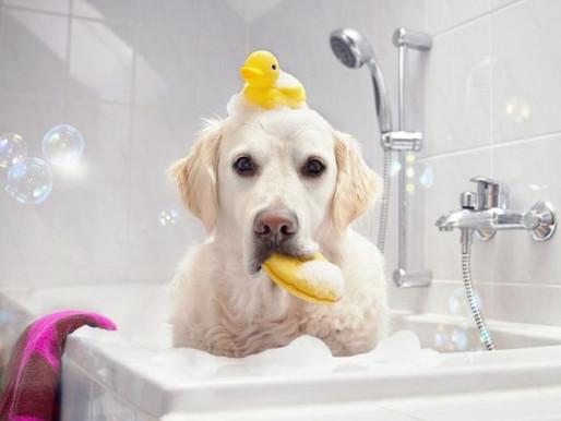Ποιες είναι οι βασικές ανάγκες ενός σκύλου;