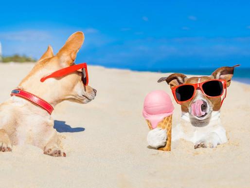 Φτιάξτε σπιτικό παγωτό και γρανίτα για τον σκύλο σας!